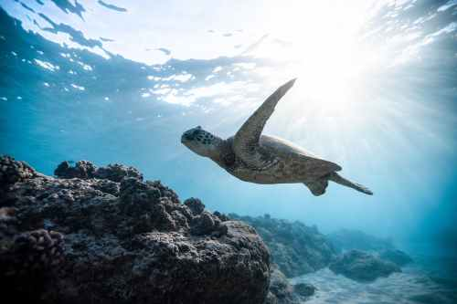 photo of sea turtle